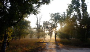 india-bandhavgarh-national-park-scenery